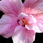 Zdjęcie profilowe Zielonacukinka