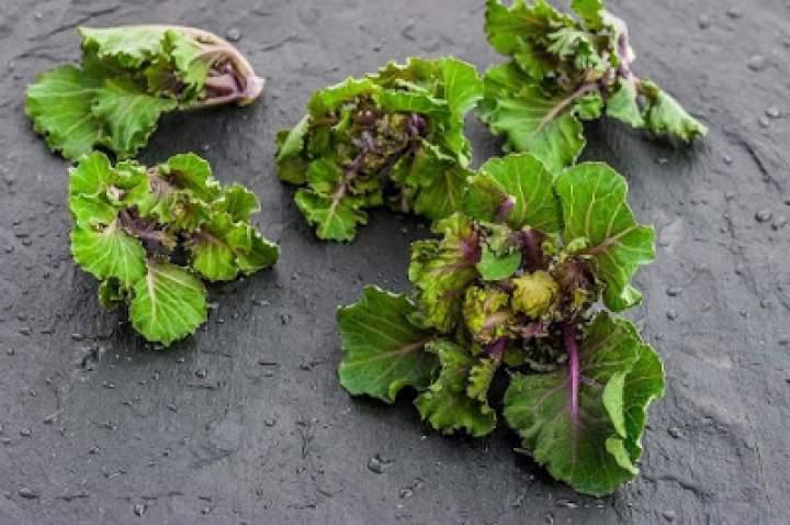 Nowe warzywo na polskim rynku – Kalerosse