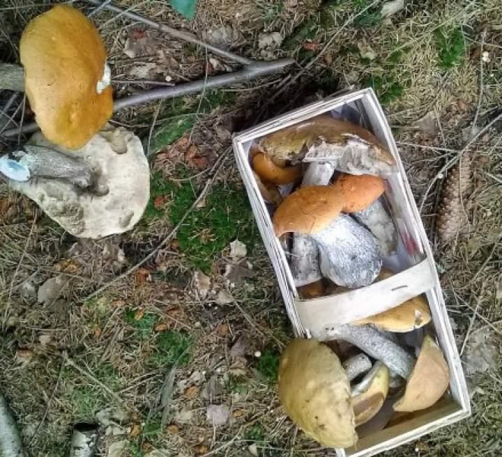 Leśne grzyby w sosie śmietanowym