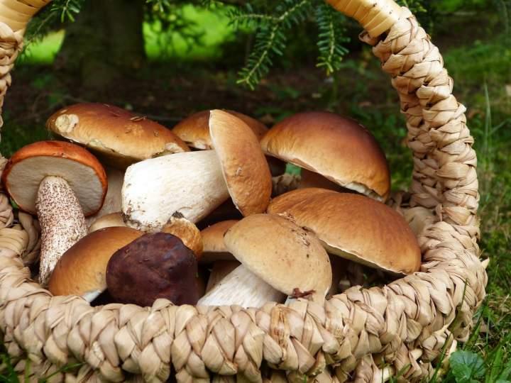 Jakie przetwory zrobić ze świeżych z grzybów?