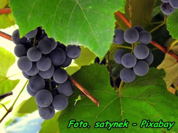 Nalewka z ciemnych winogron ( z przyprawami ).