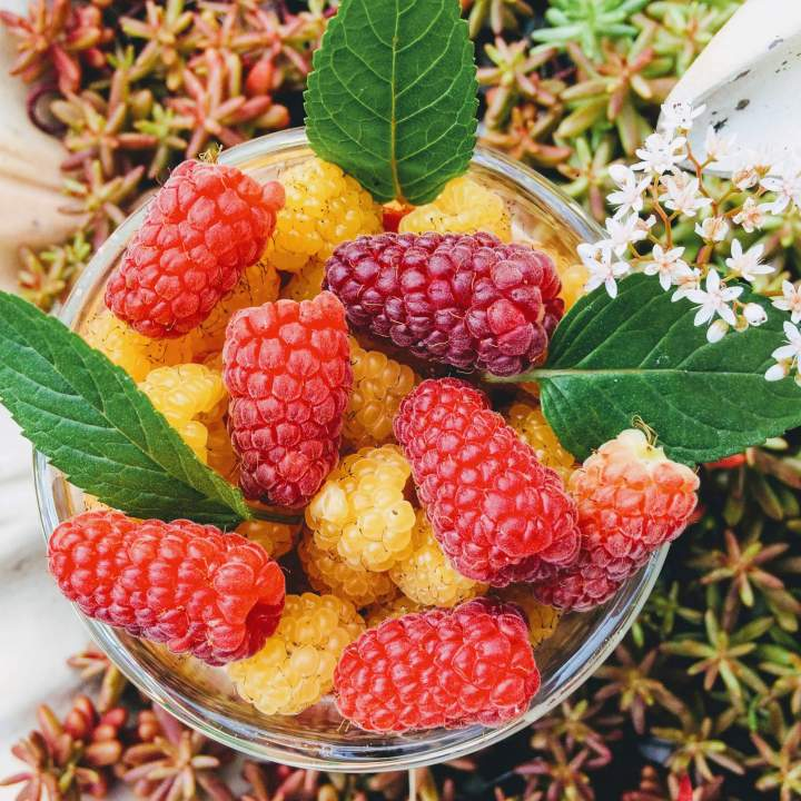 Truskawkowy deser jaglany z syropem z bzu świeżymi owocami słodzony