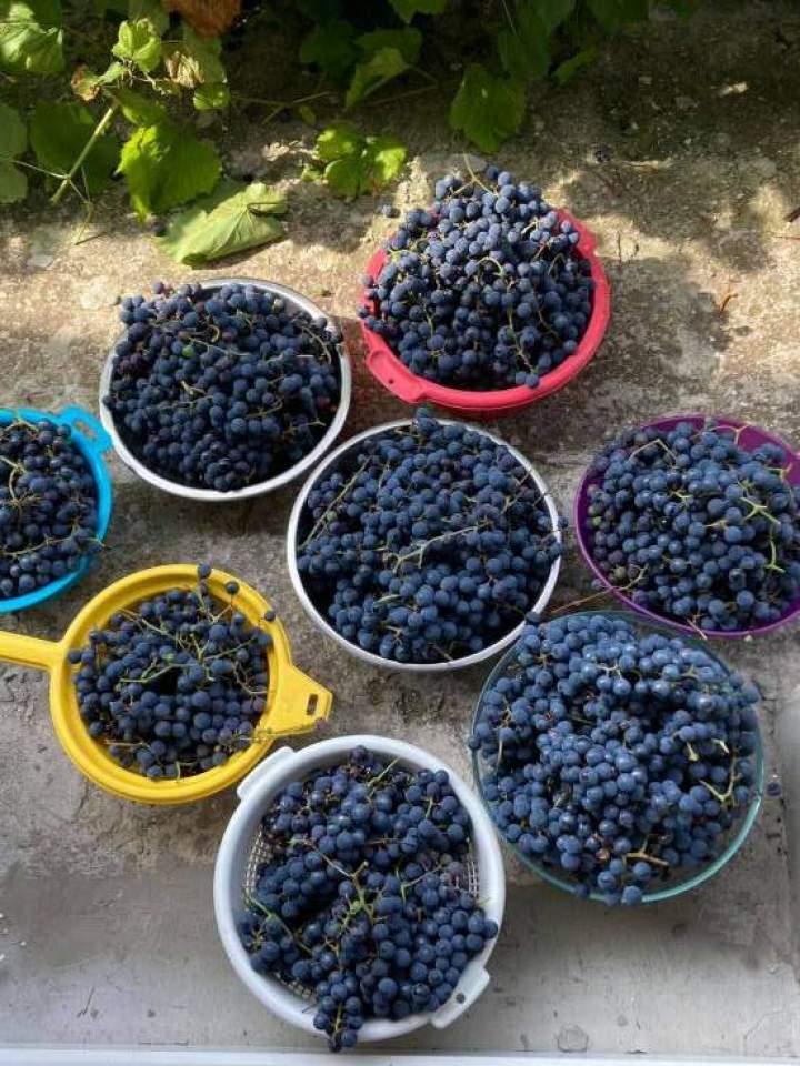 Domowy dżem winogronowy