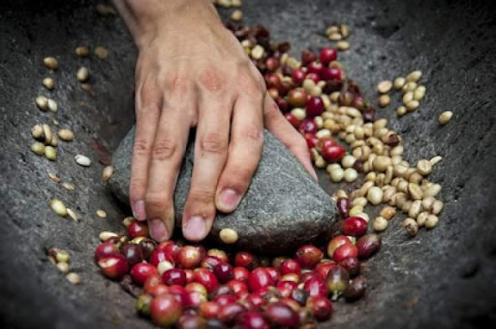 Ekologiczna kawa – o co w niej chodzi?